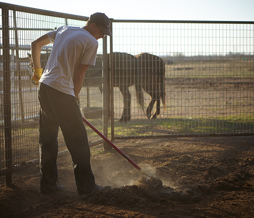 Boys Ranch boy cleaning horse stalls as part of the Horse Program